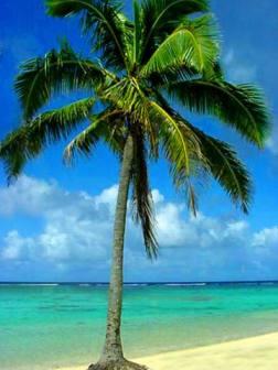 palm_tree_