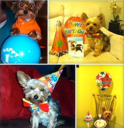 Mo Birthday Pics. Jenn Press Arata Doggie Party Segment